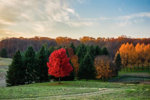 fall-red tree_DSC8406