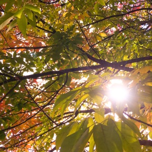 changing leaves and sun