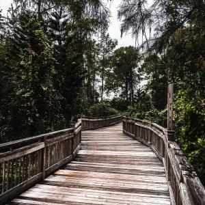 boardwalk swamp